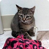 Adopt A Pet :: Zobi - Janesville, WI