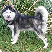 Adopt A Pet :: BLAZER - McKinleyville, CA