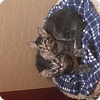 Adopt A Pet :: Zoey - Tempe, AZ