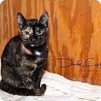 Adopt A Pet :: Tortellini $35 adoption - Monterey, VA
