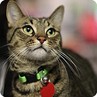 Adopt A Pet :: Yuletide - Dearborn, MI