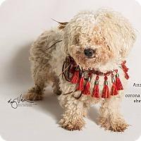 Adopt A Pet :: KENNEL 11 - Corona, CA