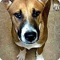 Adopt A Pet :: Nigel - Spring Branch, TX