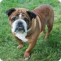 Adopt A Pet :: Zeus - Chicago, IL