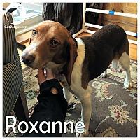 Adopt A Pet :: Roxanne - Novi, MI