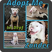Adopt A Pet :: Zander - Cheney, KS