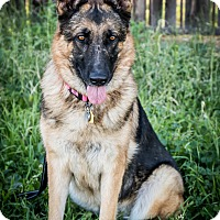 Adopt A Pet :: Elle / River - Phoenix, AZ