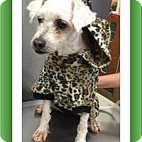 Adopt A Pet :: Beamer - SE TX - Tulsa, OK