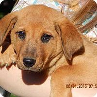 Adopt A Pet :: Hank (12 lb) - SUSSEX, NJ