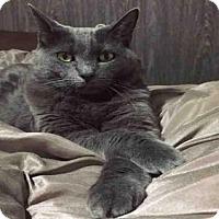 Adopt A Pet :: A384618 - San Antonio, TX