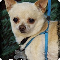 Adopt A Pet :: Earl - Anaheim Hills, CA
