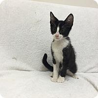 Adopt A Pet :: Ulysses - Mission Viejo, CA