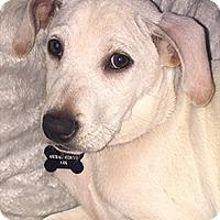 Adopt A Pet :: Ralph - Patterson, NY