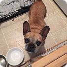Adopt A Pet :: Tuna