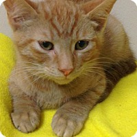 Adopt A Pet :: Lester - St. Francisville, LA