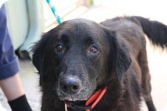 Australian Shepherd Mix Dog for adoption in Martinsville, Indiana - Briana