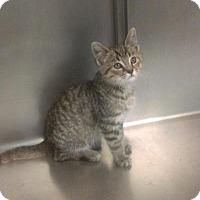 Adopt A Pet :: Glenn - South Haven, MI