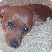 Adopt A Pet :: Tater Tot - Columbus, OH