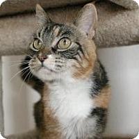Adopt A Pet :: Marie - Sacramento, CA
