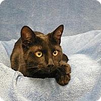 Adopt A Pet :: Poe - Sacramento, CA