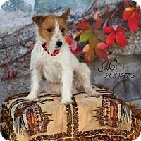 Adopt A Pet :: Mitzi in Houston - Houston, TX