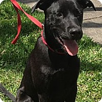 Adopt A Pet :: Obie - Largo, FL