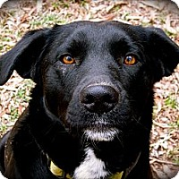 Adopt A Pet :: Moonshadow - Jackson, TN