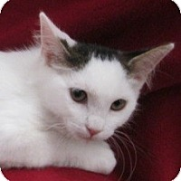Adopt A Pet :: Amber - Richland, MI