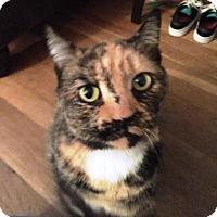 Adopt A Pet :: Rosetta - Turnersville, NJ