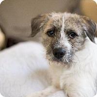 Adopt A Pet :: Charlie - Rayville, LA