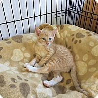 Adopt A Pet :: Norton - Speonk, NY
