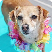 Adopt A Pet :: Pez - Smyrna, GA