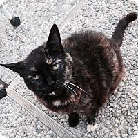 Adopt A Pet :: Sadie - Novato, CA