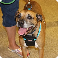 Adopt A Pet :: Sammy - Yuba City, CA
