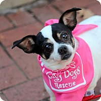 Adopt A Pet :: Hattie - Washington, DC
