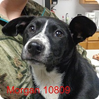 Adopt A Pet :: Morgan - baltimore, MD