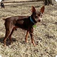 Adopt A Pet :: Chaco - Shawnee Mission, KS