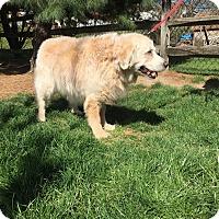 Adopt A Pet :: Sandy - Irwin, PA