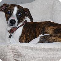 Adopt A Pet :: Jackson - Los Angeles, CA