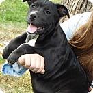 Adopt A Pet :: Olive (18 lb) New Pics & Video