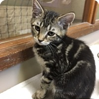 Adopt A Pet :: Micah - Medina, OH