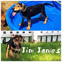 Adopt A Pet :: Jim James - Jersey City, NJ