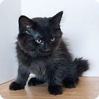 Adopt A Pet :: Curley Sue - Muskegon, MI