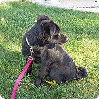 Adopt A Pet :: Cheech - Racine, WI