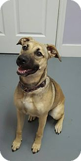 Shepherd (Unknown Type) Mix Dog for adoption in Hawk Point, Missouri - Tahlia