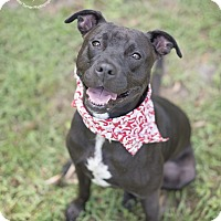 Adopt A Pet :: Beau - Portland, OR