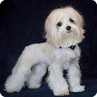 Adopt A Pet :: Winston - Phelan, CA