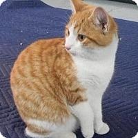 Adopt A Pet :: Max - Somerset, KY