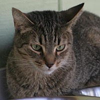Adopt A Pet :: Reba - North Fort Myers, FL