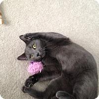 Adopt A Pet :: Winston - Sewaren, NJ